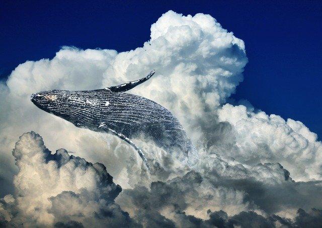 Différence Entre Baleine Et Cachalot