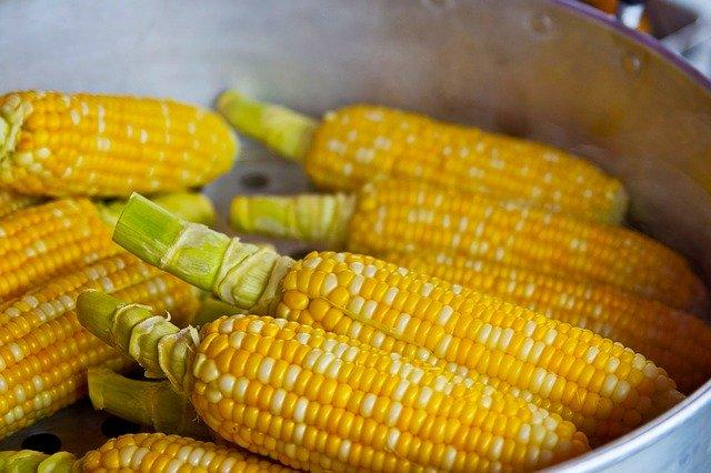 Qu'est ce que le maïs ?