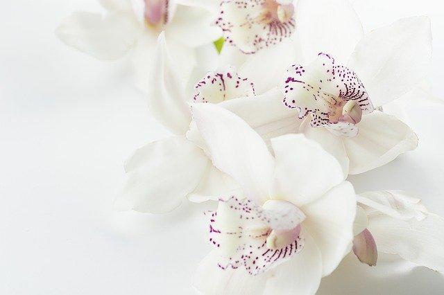 comment faire repartir une orchidée