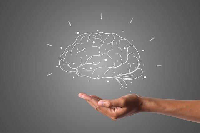 Qu'est ce que les fonctions cognitives