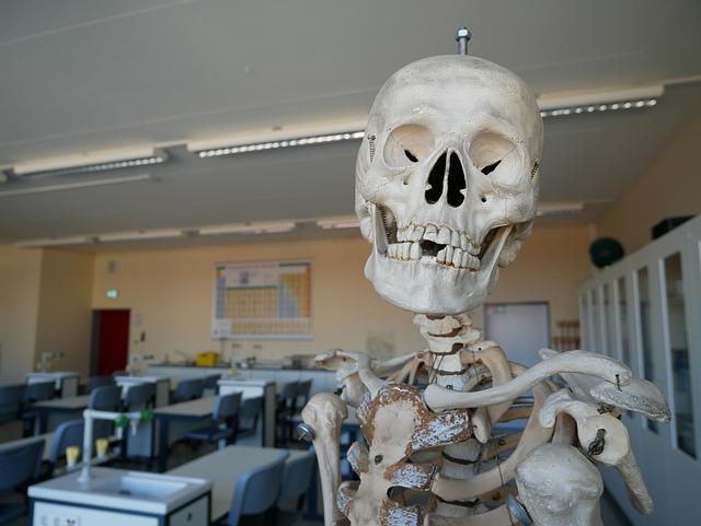 Qu'est ce que l'anatomie ?