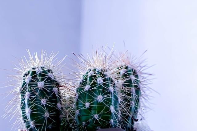 Comment transplanter un cactus